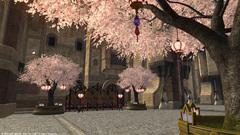 ウルダハの桜〜6