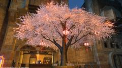 ウルダハの桜〜8