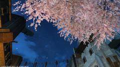ウルダハの桜〜9