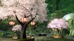 グリダニアの桜〜4.jpg