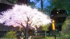 グリダニアの桜〜6.jpg