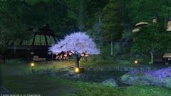 グリダニアの桜〜7.jpg