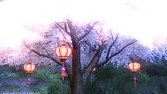 グリダニアの桜〜9.jpg