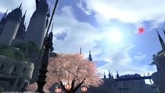 リムサの桜〜2.jpg